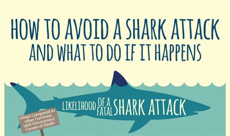 to avoid the s how to avoid a shark attack and what to do if it happens How