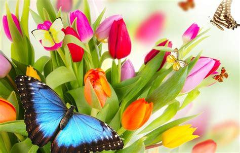 wallpaper butterfly flowers bright beauty petals