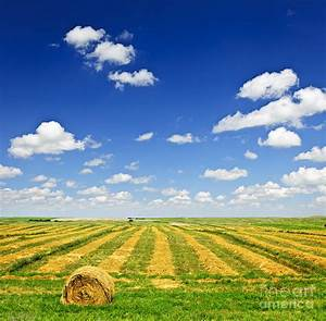 Wheat Farm Field At Harvest Photograph by Elena Elisseeva