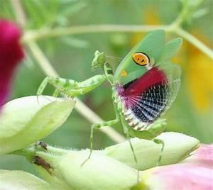Awesome Animals blog: Whoa! Amazing indian flower mantis!!i