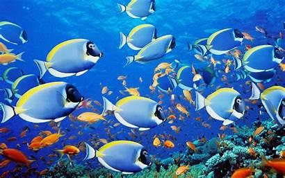 Underwater Wallpapers Fishs Wallpapers13