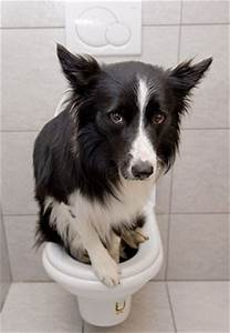canine urinary tract infections uti