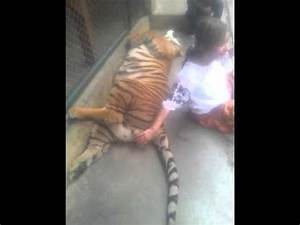 Hitomi messing around with the tiger's balls - YouTube