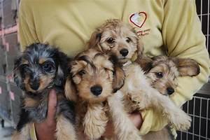 Adopter Un Animal De Compagnie Los Angeles Chien Chat