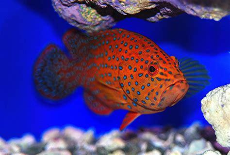 grouper spotted flickr aquarium camera filter