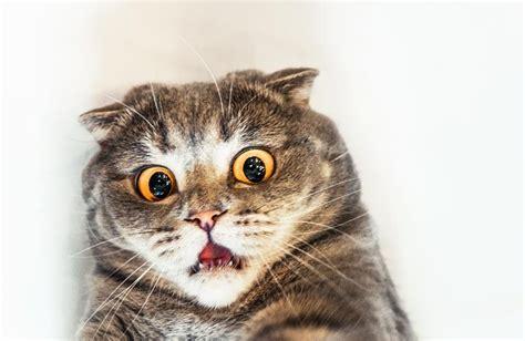 Wanita Hamil Itu Bahaya Bulu Kucing Bagi Manusia Menurut Dokter Terpercaya