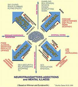 The Brain, Neurons, And Drugs - Alcohol and The Brain: A ...