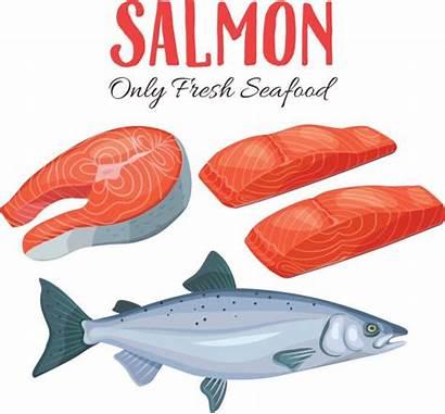 Salmon Cartoon Illustration Clip Vector Fillet Fish