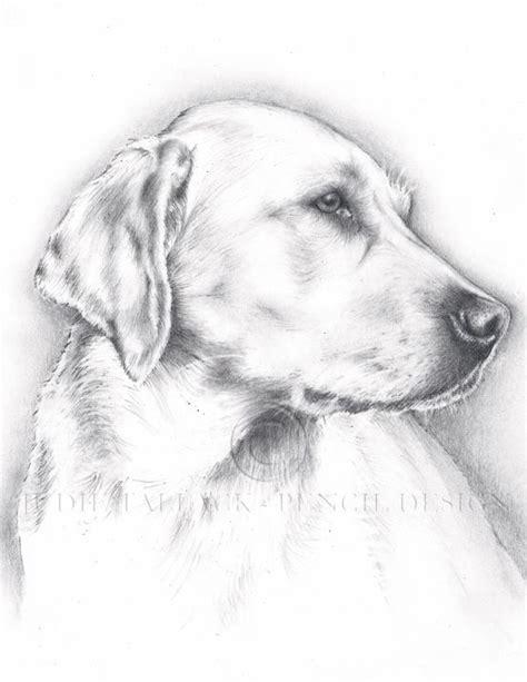 yellow labrador pencil drawing pet portrait commissions