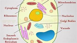 Labelled Diagram Of A Plant Cell Under A Microscope