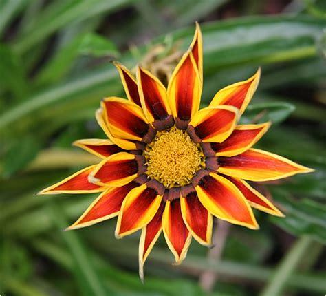 Blüte Foto & Bild  Pflanzen, Pilze & Flechten, Blüten
