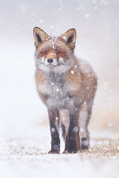 how cute pet foxes steal your heart 41 adorable animal family portraits that will your i m hugging you now