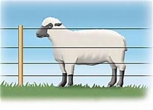 Grillage à Mouton 1m50 : cl ture electrique pour mouton ~ Dailycaller-alerts.com Idées de Décoration