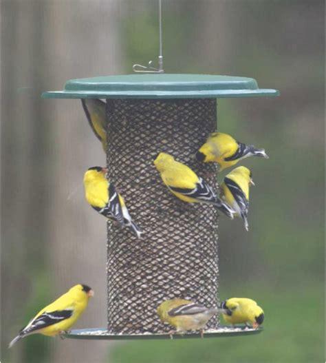 birds choice magnet mesh safflower bird feeder bird
