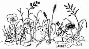 Was Brauchen Pflanzen Zum Wachsen : im garten pflanzen brauchen sonnenlicht zzzebra das web magazin f r kinder labb verlag ~ Frokenaadalensverden.com Haus und Dekorationen