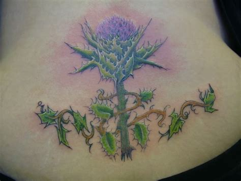 48 Best Images About Thistle Tattoos On Pinterest Vector