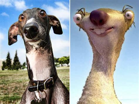Dogs That Don't Really Look Like Dogs
