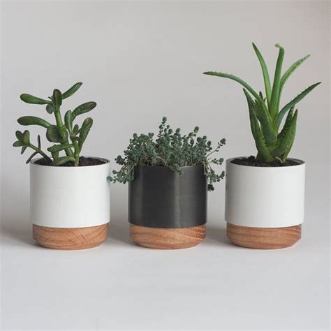 best office desk plants best office desk plants best desk plants 12 for the