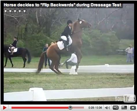 horse flipping scary looking nice bit behind behavior
