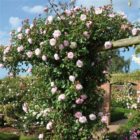 Garten Und Landschaftsbau Rosengarten by Gartengestaltung Mit Tipps F 252 R Einen Sch 246 Nen