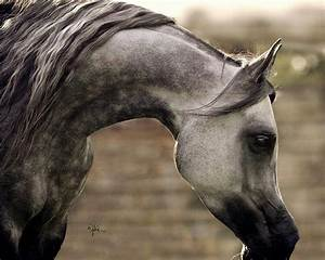 235 best images about Dapple Grey Ref on Pinterest ...