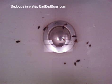 Flying Ants In Bathroom Sink by Tiny Bugs In House Bathroom Brightpulse Us