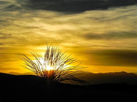 Sunset Mit Yucca Wwwwildeweiteweltde