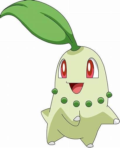 Pokemon Teeth Looks Judgment Johto Starters Chikorita