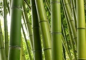 Bambus Vernichten Tipps : tolle bambus tipps f r ihren garten auch f r kleinere fl chen ~ Whattoseeinmadrid.com Haus und Dekorationen