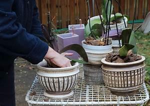 Erde Für Kräuter : cymbidium in welcher erde f hlt die orchidee sich am ~ Lizthompson.info Haus und Dekorationen