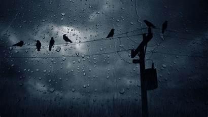 Rain Nature Wallpapers Birds Desktop Backgrounds Mobile