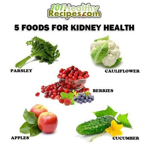 organic kidney diet  dogs consultantposts