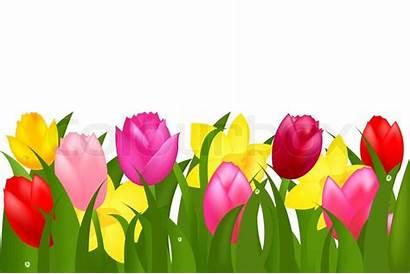 Border Tulips Spring Clipart Flowers Tulip Flower
