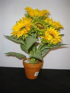 The gallery for --> Sunflower Plant In Pot