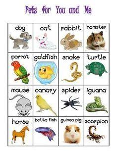 pet worksheets images worksheets preschool