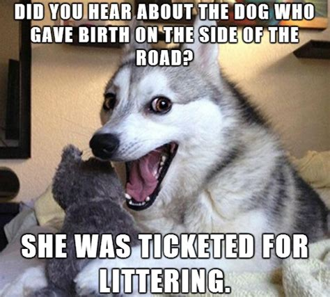 Pun Dog Meme - ticketed on the side of the road beheading boredom