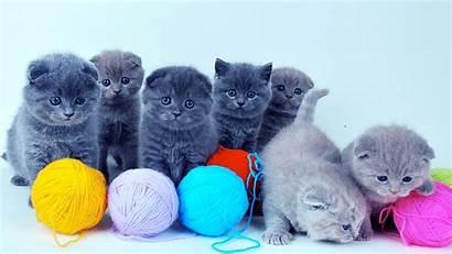 Cats Wallpapers Desktop Cat Animal Resolution Very