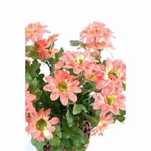 Mini Plante Artificielle : chrysantheme mini plante artificielle fleurs plantes artificielles ~ Teatrodelosmanantiales.com Idées de Décoration