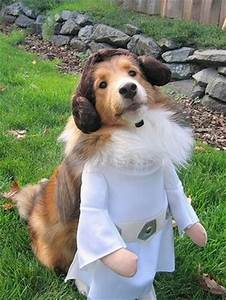 dog star wars may the fourth