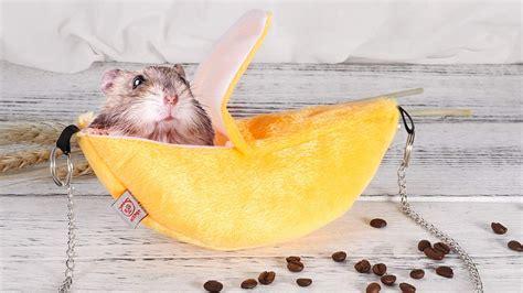 Hamster Hammock by Banana Hamster Hammock Dudeiwantthat