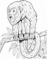 Monkey Coloring Pages Howler Tree Tamarin Printable Realistic Monkeys Golden Lion Emperor Primate Supercoloring Sheet Puzzle Animals Comments Drawings Library sketch template