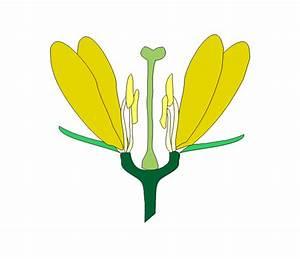 Aufbau Einer Blume : die honigmacher schnupperkurs wie ist eine bl te aufgebaut ~ Whattoseeinmadrid.com Haus und Dekorationen