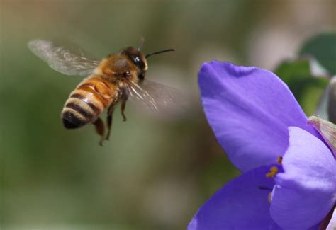 Oh Honey, Bee Happy Standingoutinmyfield