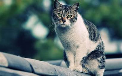 Cat Wallpapers Cats Desktop Spotted Nice Gato