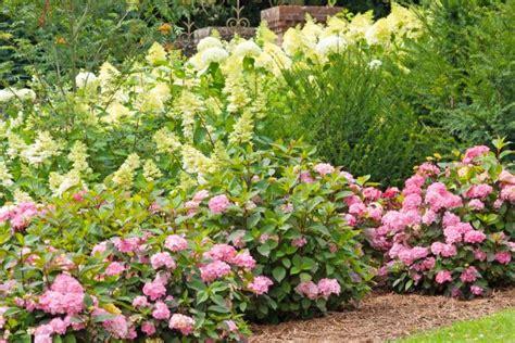 types of hydrangea diy