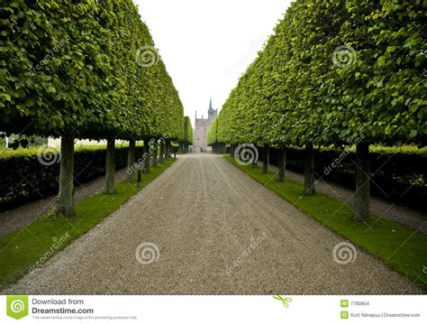 6 chain link fence grand hedge lined driveway stock photo image of building