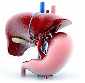 Профилактика заболевания печени препараты