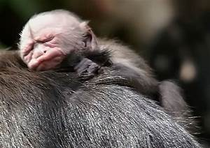 Animals Zoo Park: Pictures of Monkeys, Spider Monkey, Baby ...