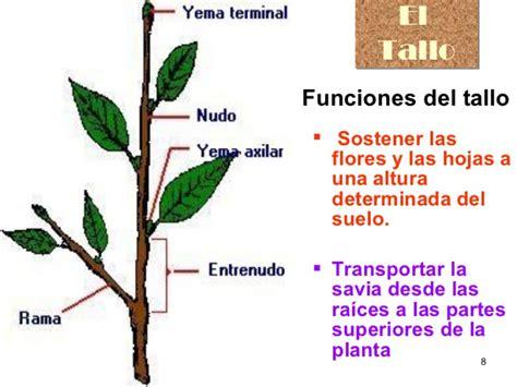 las plantas  flores tallo