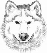 Wolf Coloring Pages Realistic Printable Face Head Colouring Adult Sheets Animal Clipart Dog Theme Wolves Adults Info Clip Visit Library sketch template